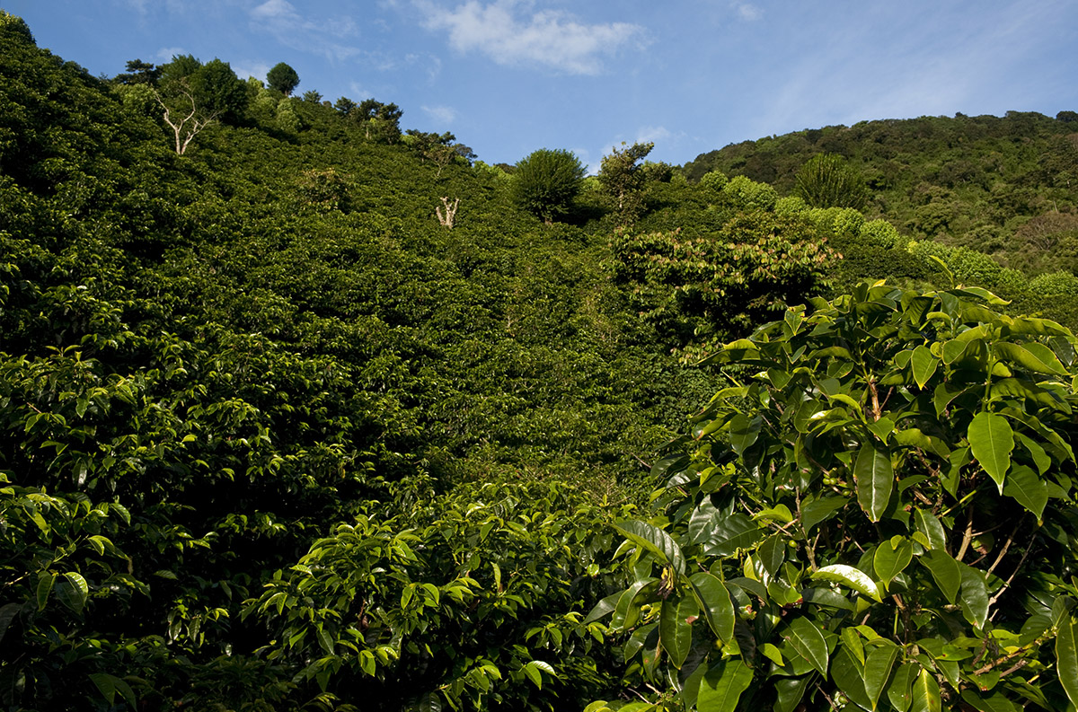 COLOMBIA NATIONAL WINNER – FINCA HEBRON